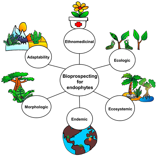 Figure 2 - Bioprospecting for endophytes.