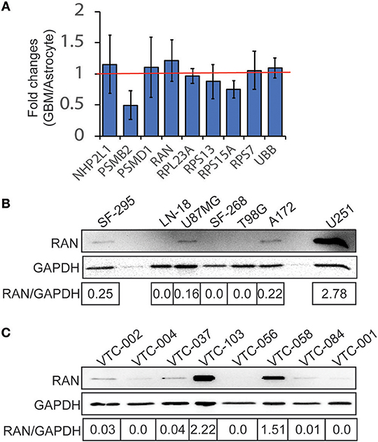 Frontiers   Functional Blockade of Small GTPase RAN Inhibits