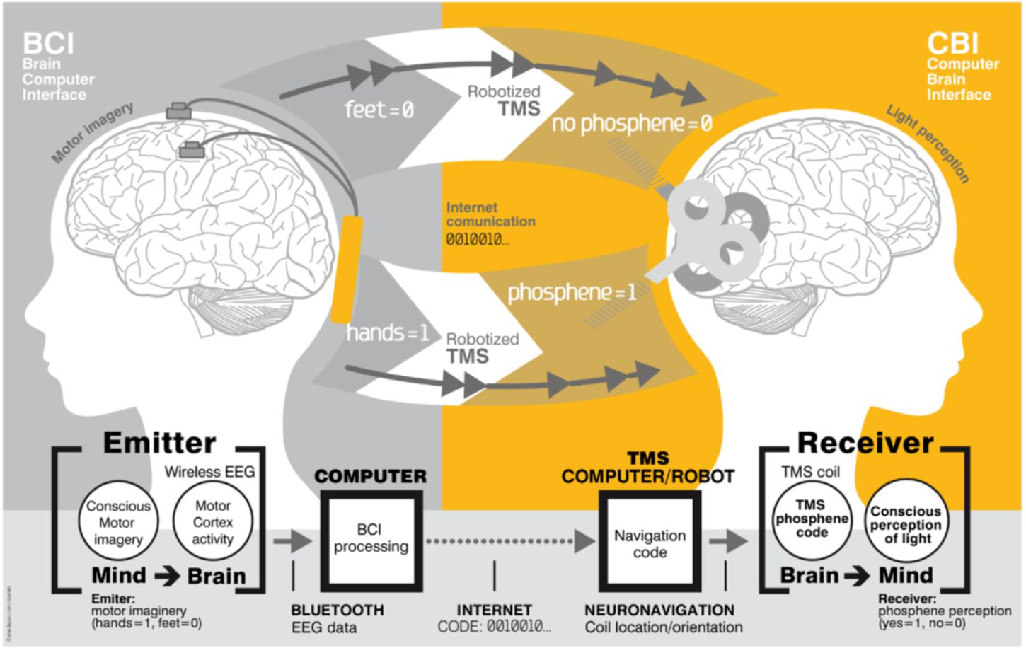 Frontiers Human Brain Cloud Interface Neuroscience
