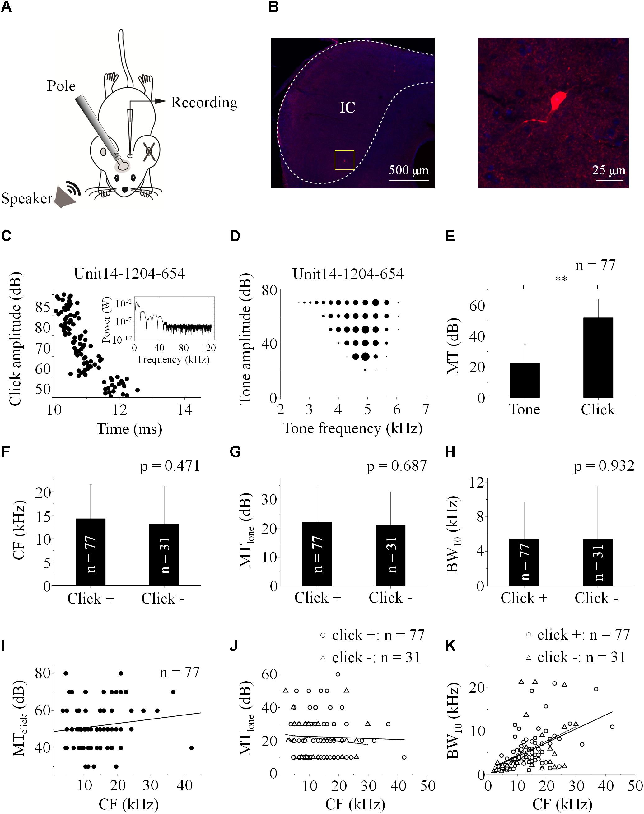 Frontiers | Processing of Paired Click-Tone Stimulation in