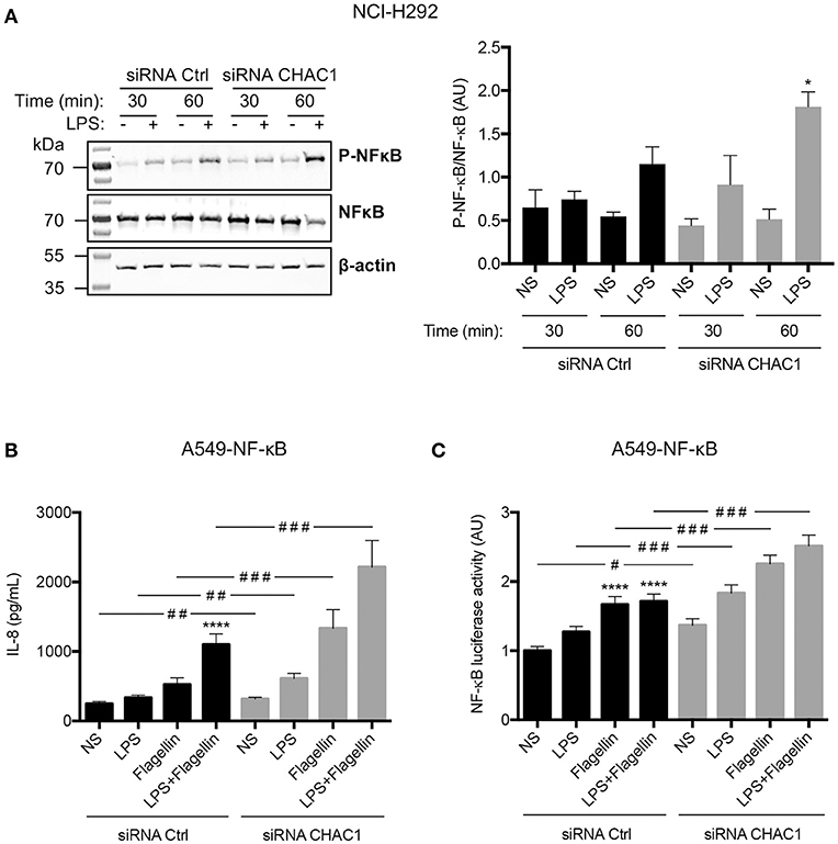 Frontiers | CHAC1 Is Differentially Expressed in Normal and Cystic