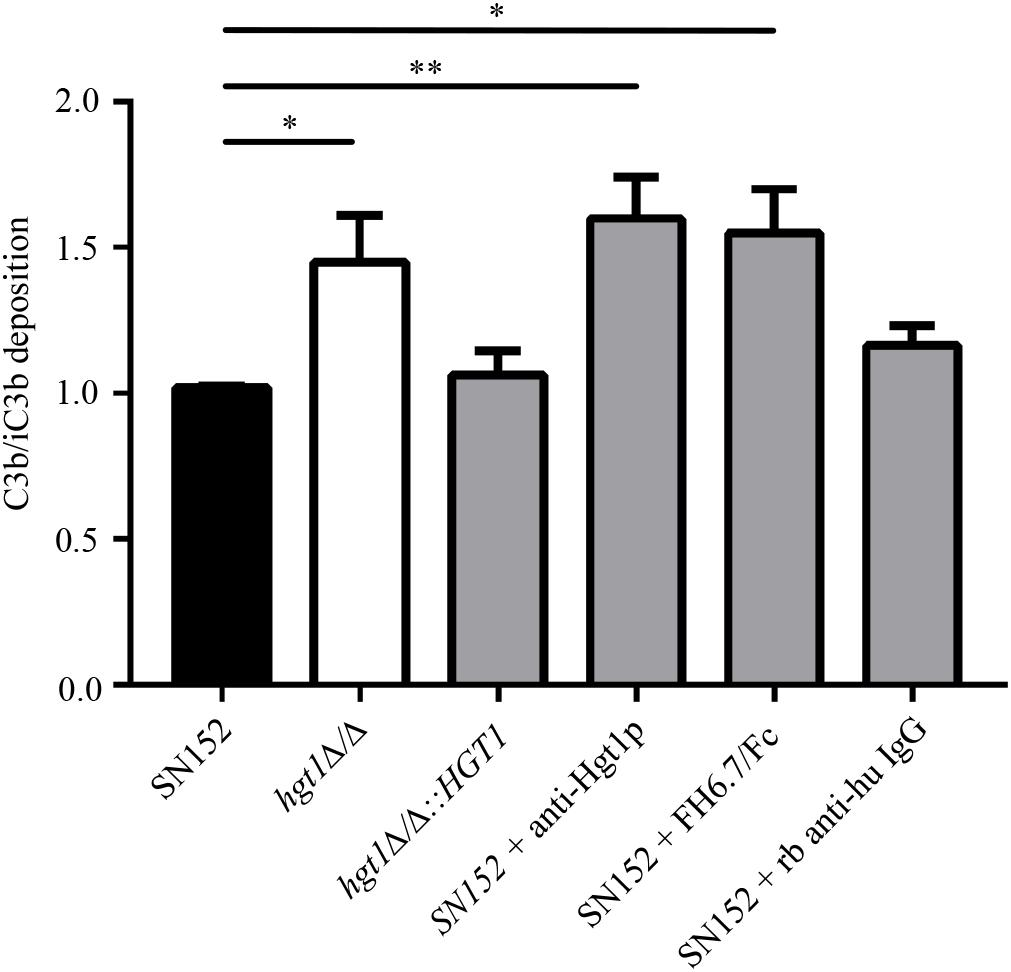 Frontiers | Candida albicans Factor H Binding Molecule Hgt1p – A Low