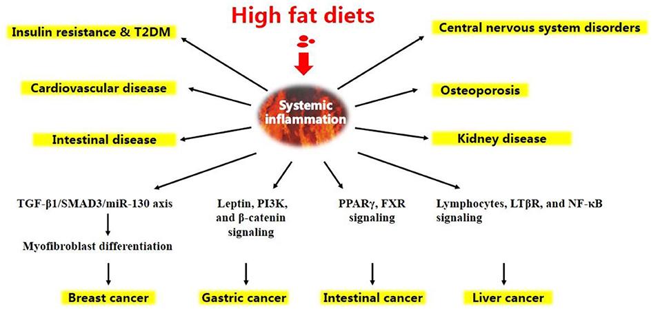 high fat diet neuroinflammation