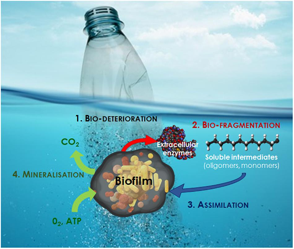 Frontiers | Microbial Ecotoxicology of Marine Plastic Debris