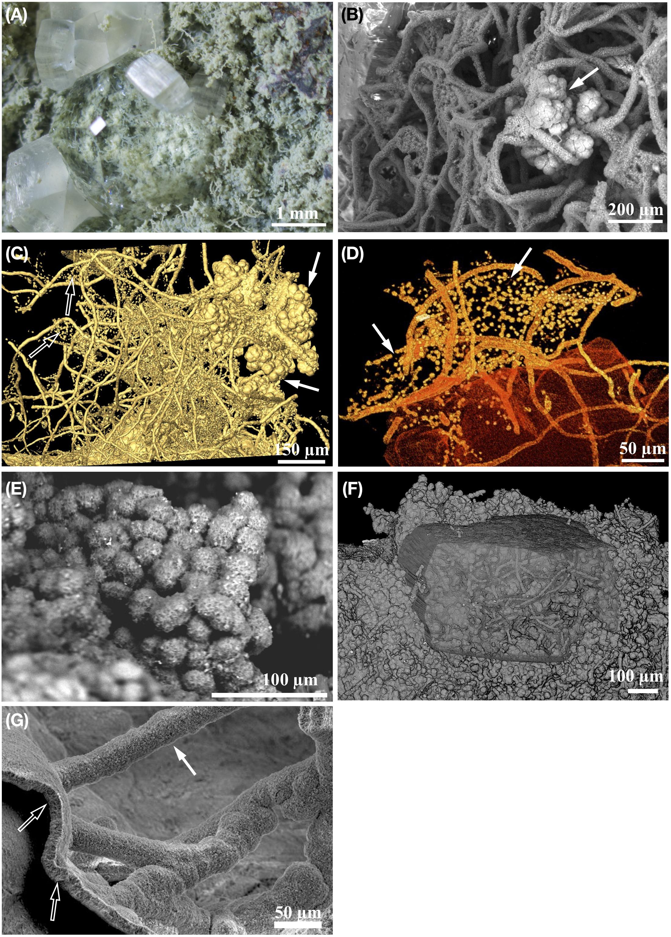 Frontiers | Morphological Biosignatures in Volcanic Rocks