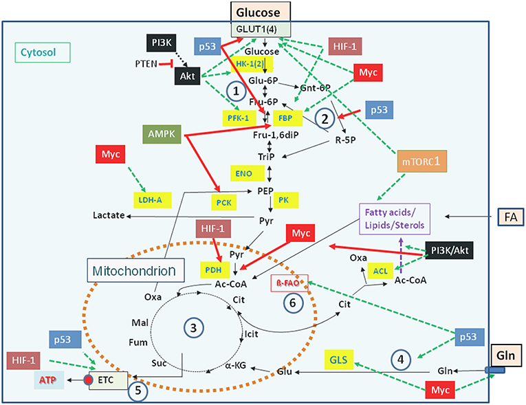 Frontiers | How Viral and Intracellular Bacterial Pathogens