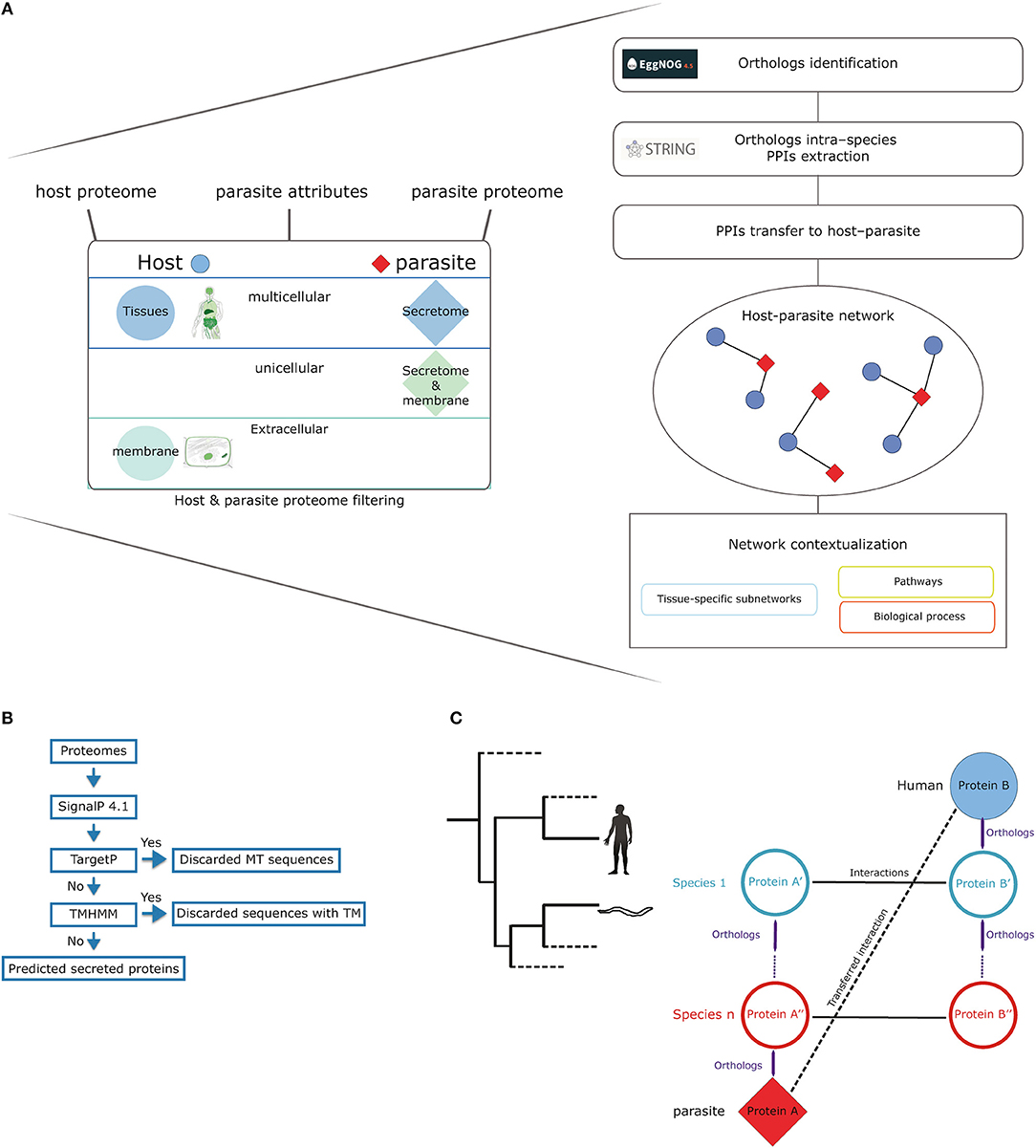 Frontiers Analysis Of Predicted Host Parasite Interactomes