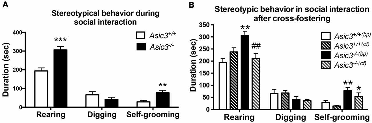 Frontiers The Effect Of Asic3 Knockout On Corticostriatal Circuit And Mouse Self Grooming Behavior Cellular Neuroscience