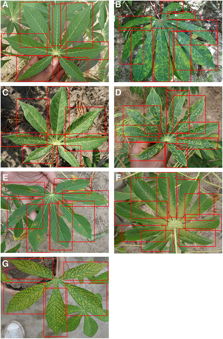 Frontiers | A Mobile-Based Deep Learning Model for Cassava