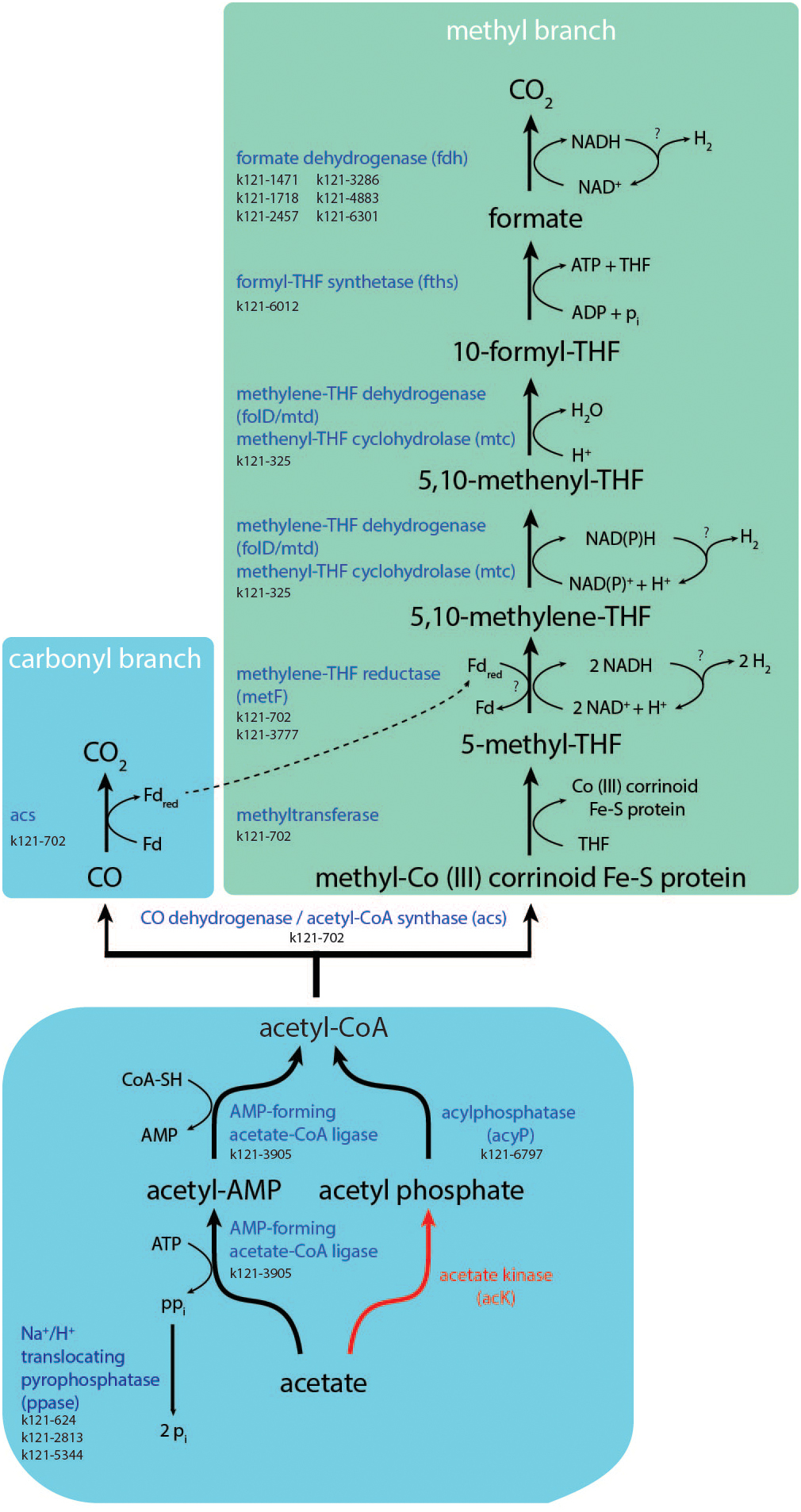 Frontiers | Metabolism and Occurrence of Methanogenic and Sulfate