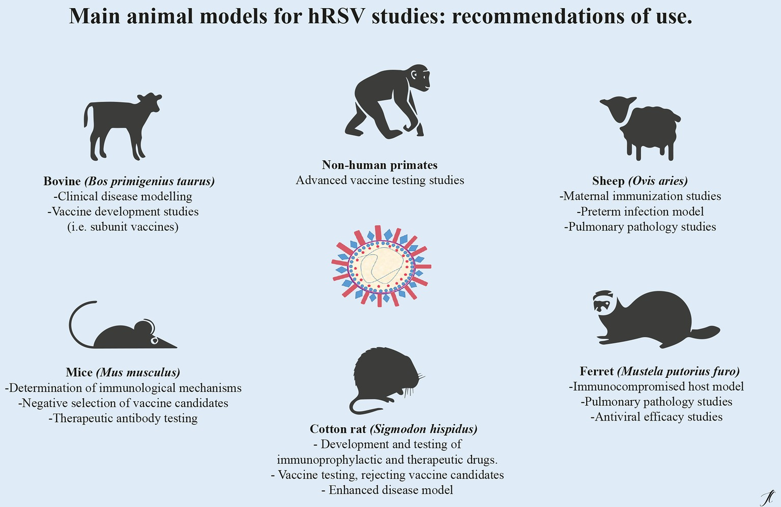 Frontiers | Current Animal Models for Understanding the