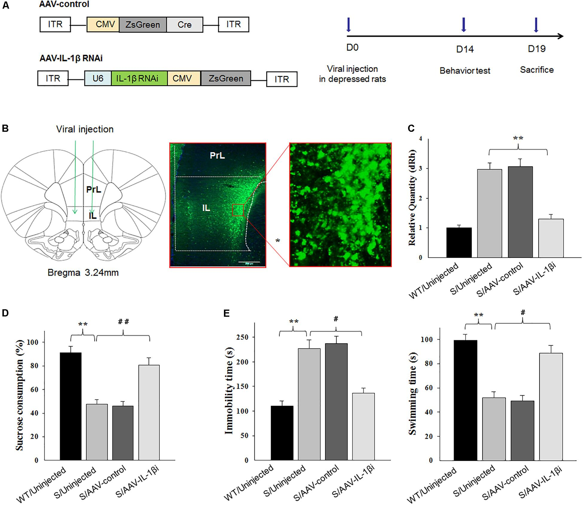 Frontiers   Neuroprotective Effects of Curcumin on IL-1β-Induced
