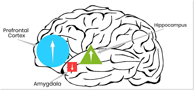 Figure 2 - Physical activity can help return brain functioning to healthy levels in the regions of the brain responsible for learning, problem solving, and responding to stress.