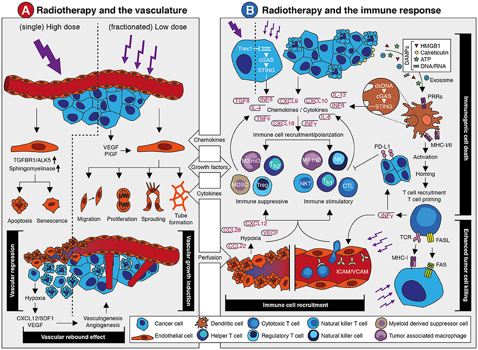 Antiangiogenic cancer treatment: The great discovery and