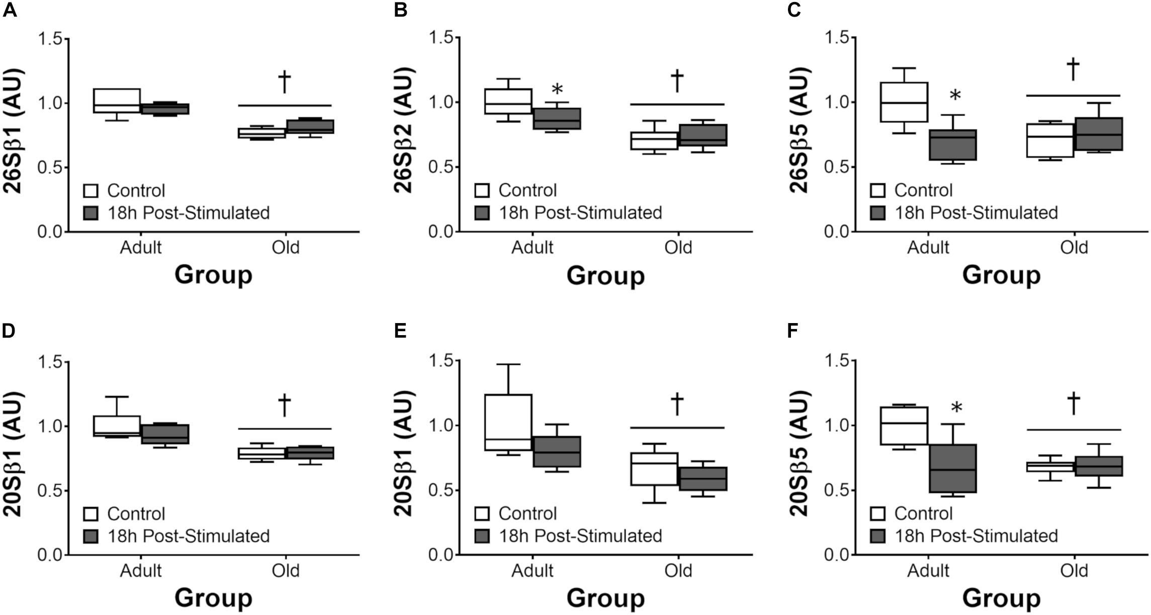 Frontiers | Normal Ribosomal Biogenesis but Shortened Protein