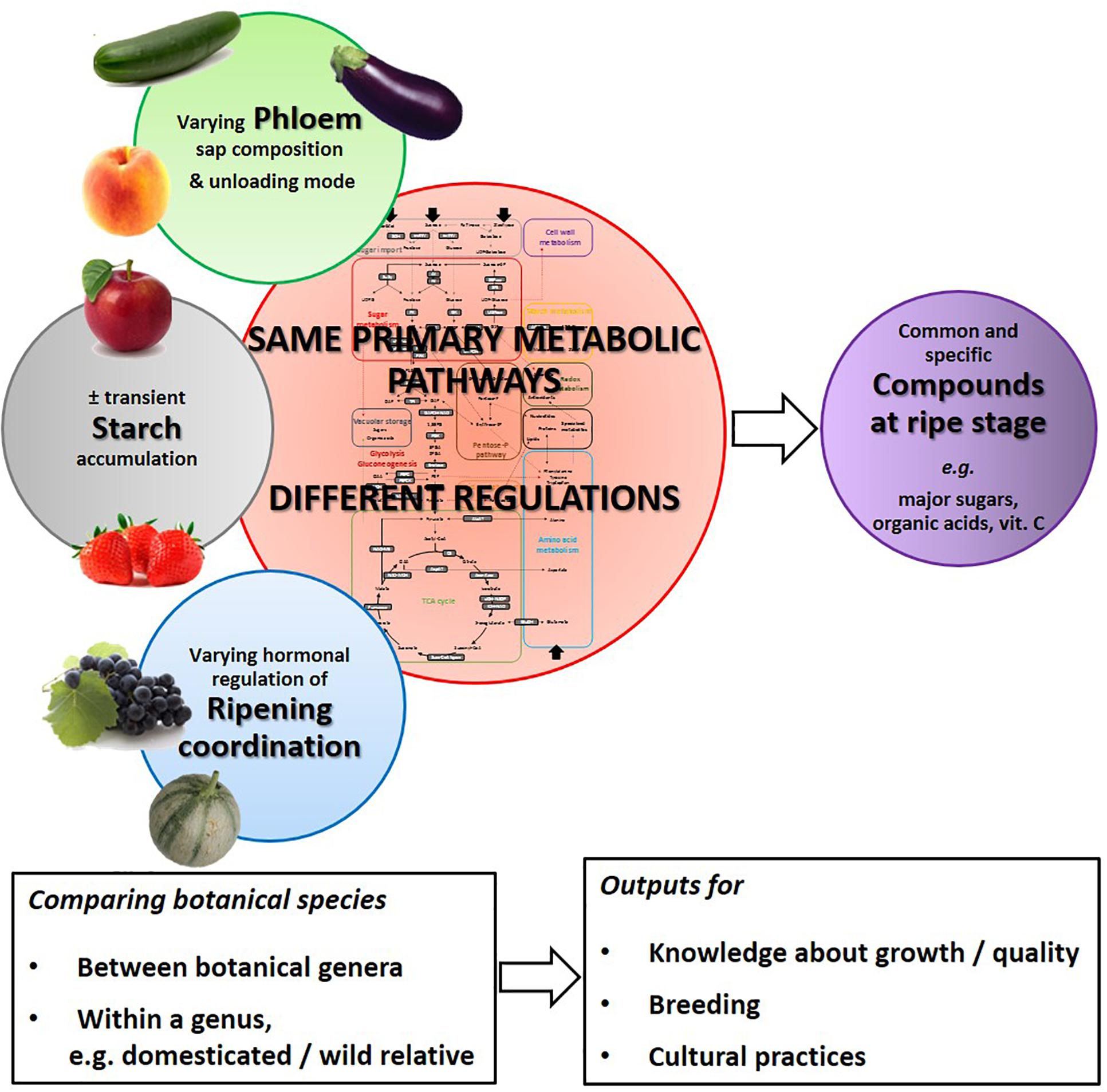 Frontiers | Fruit Salad in the Lab: Comparing Botanical Species to