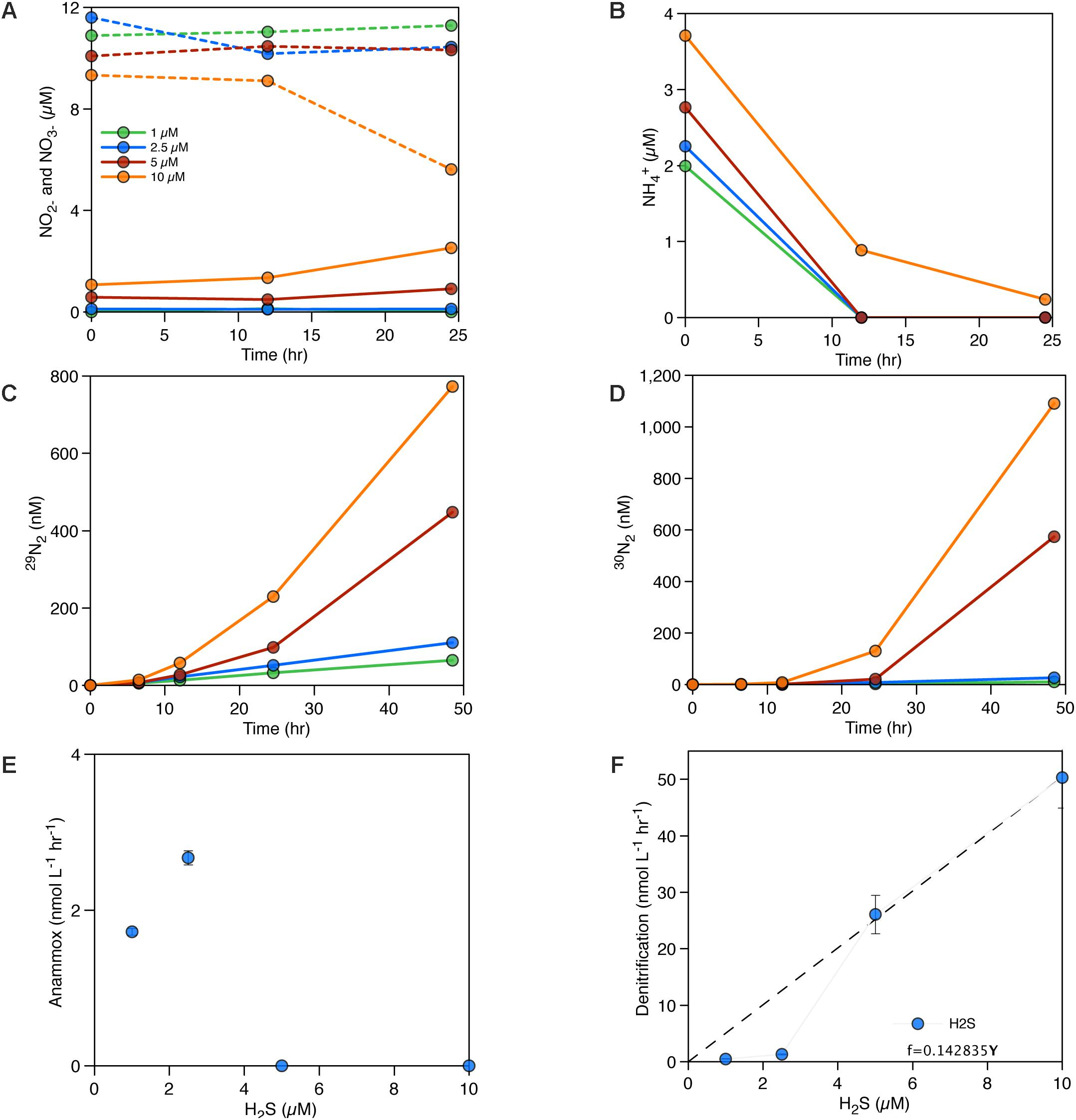 Frontiers | Rates and Pathways of N2 Production in a