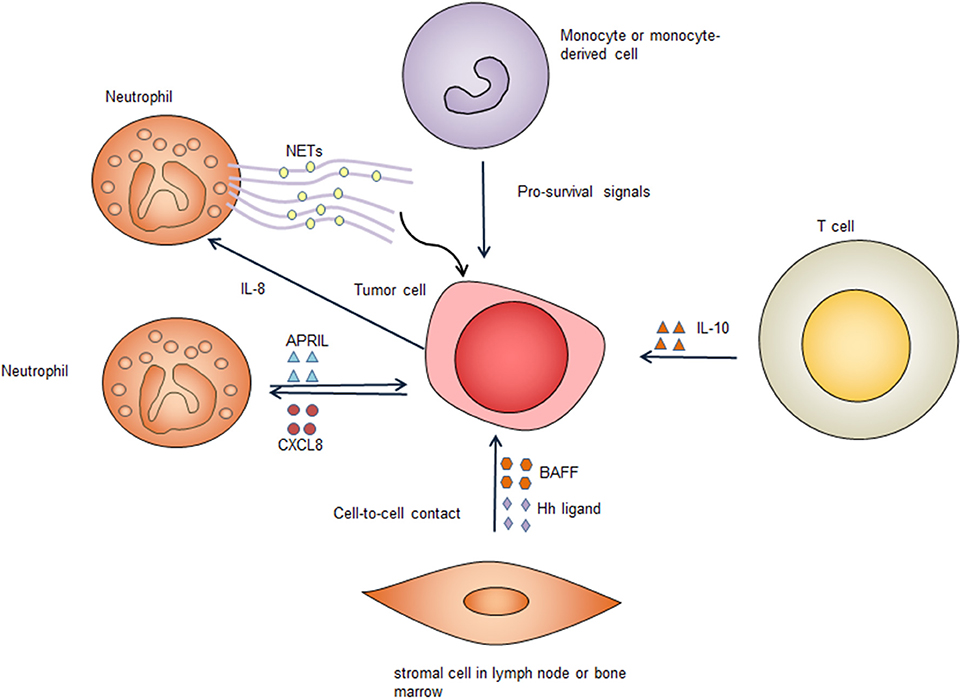 Frontiers | Dysregulation of Cell Survival in Diffuse Large