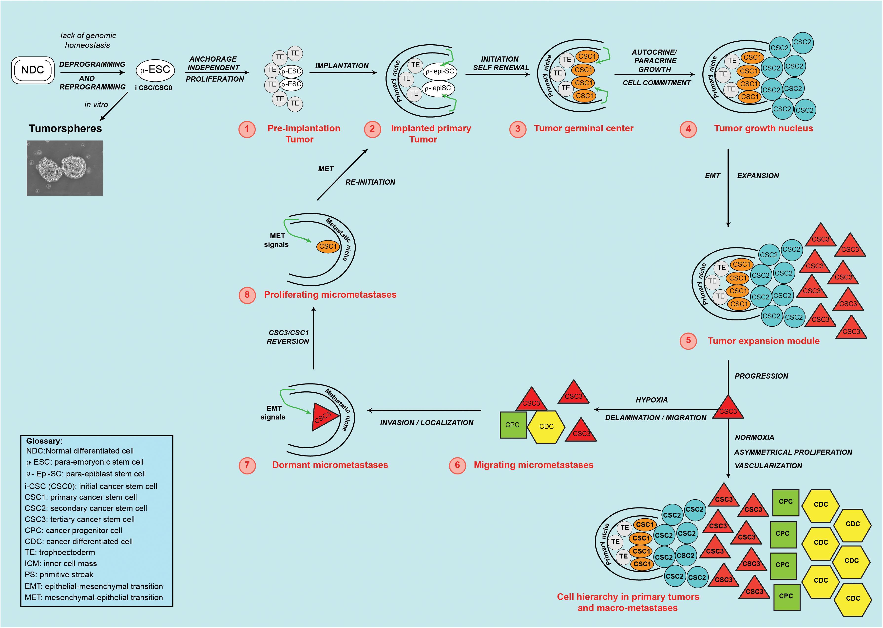 Frontiers | Similarities Between Embryo Development and Cancer