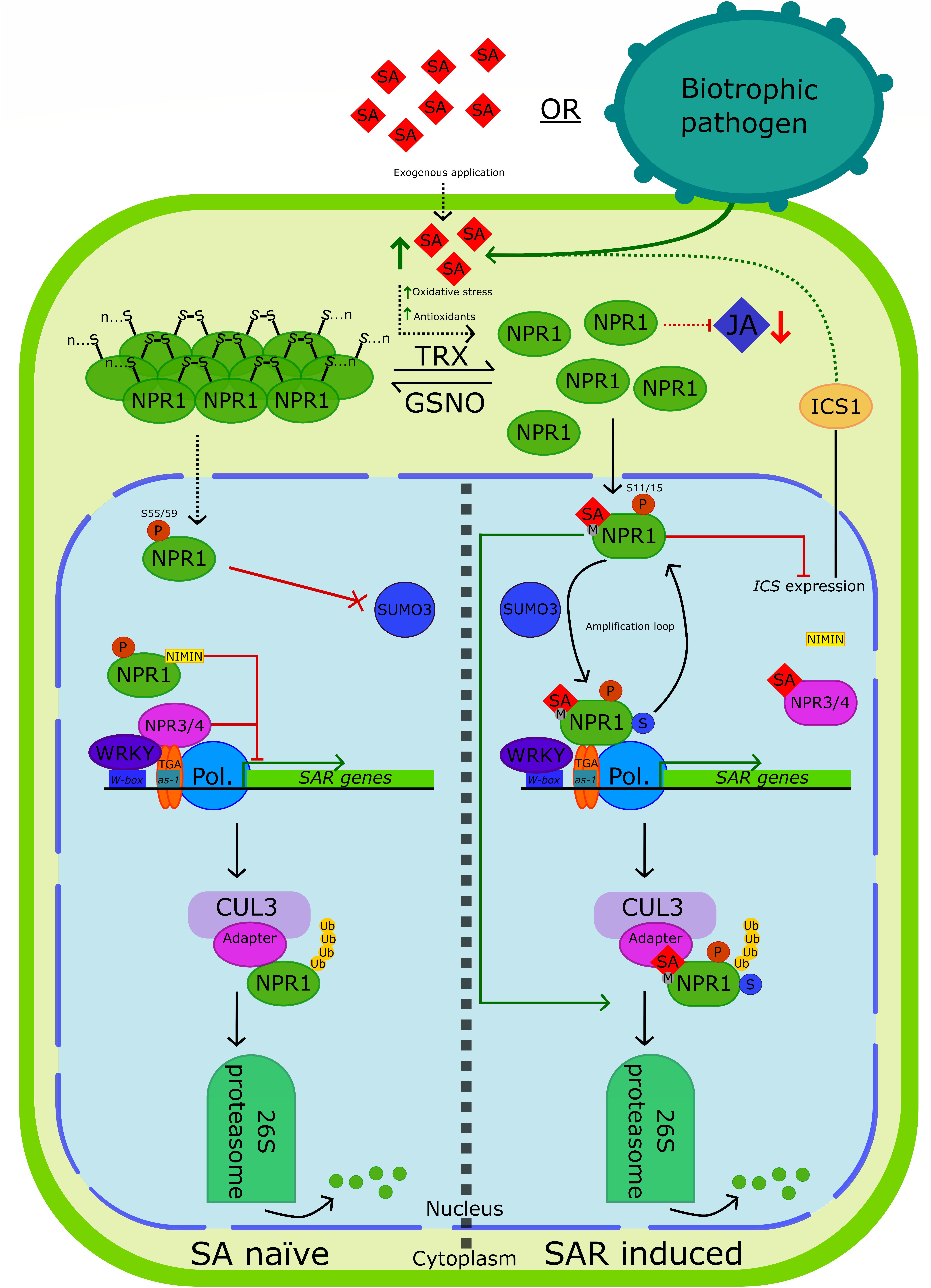 Pathogenesis Related Genes