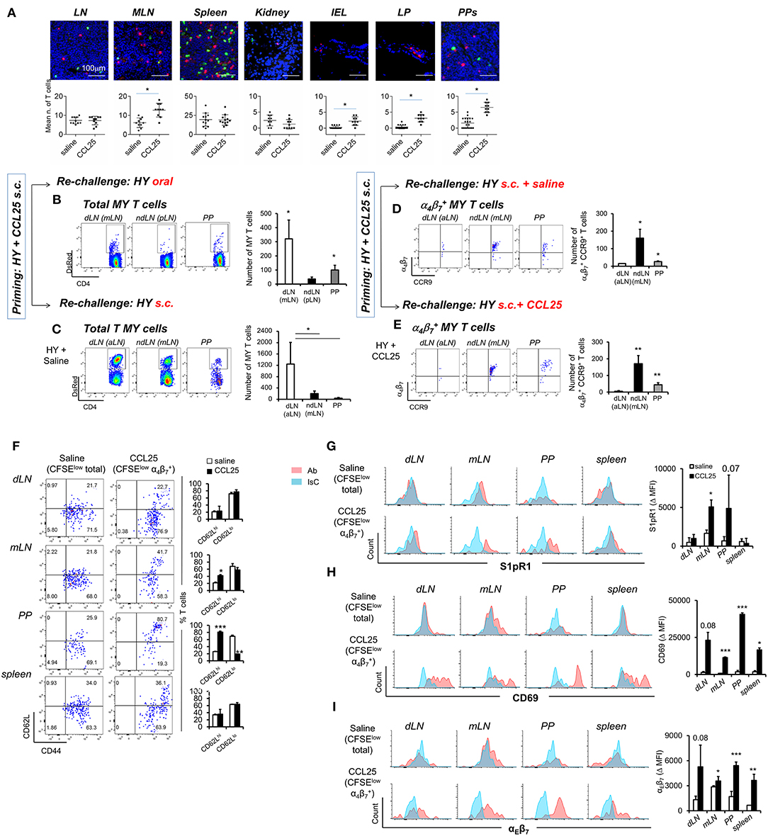 Frontiers | A Subset of CCL25-Induced Gut-Homing T Cells