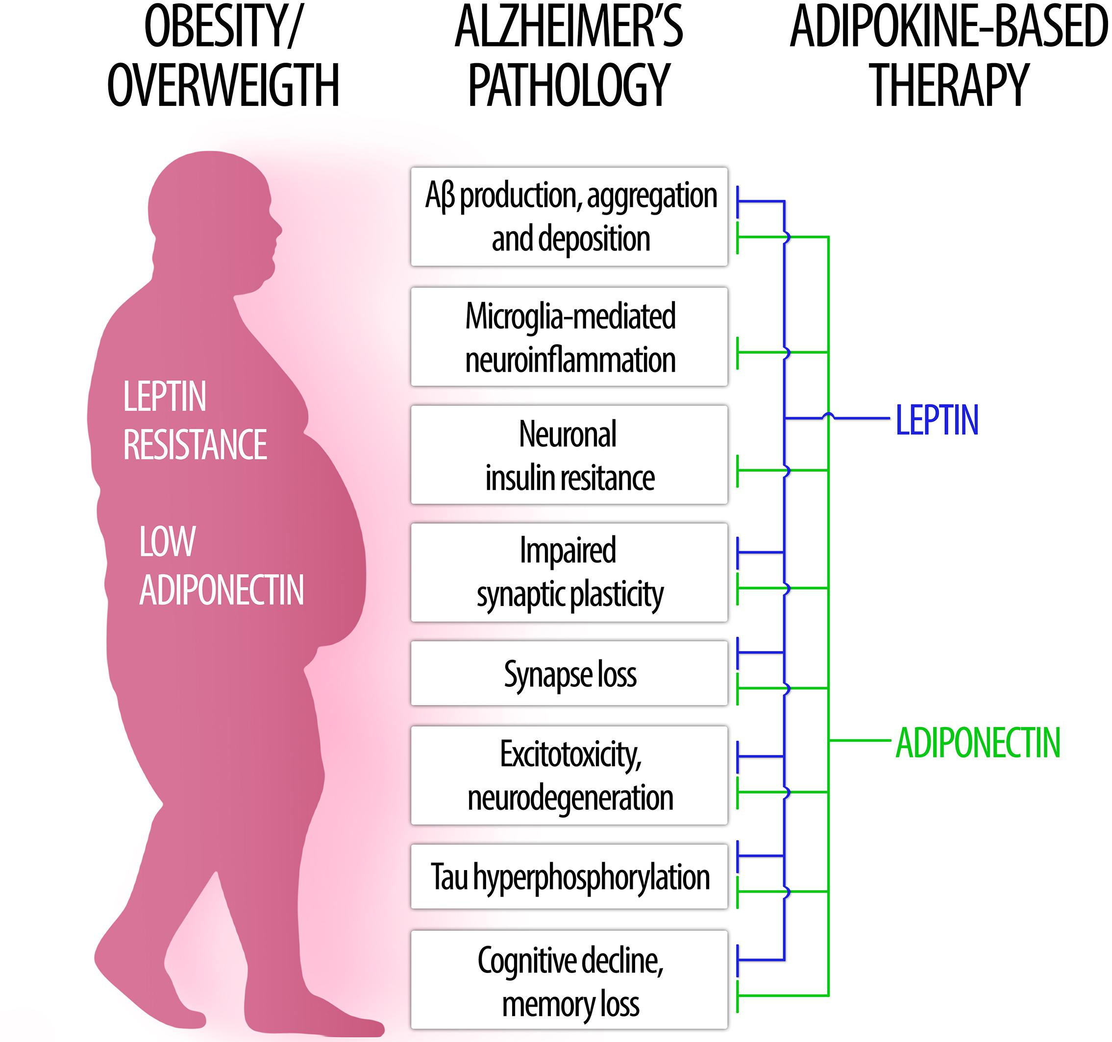 Ana Milojkovic frontiers | the role of leptin and adiponectin in obesity