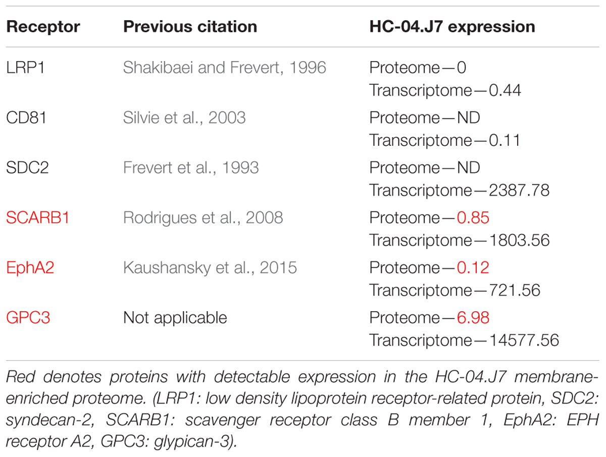 Frontiers | The Selection of a Hepatocyte Cell Line Susceptible to