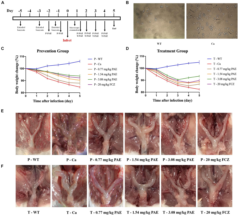 Genital candida albicans treatment
