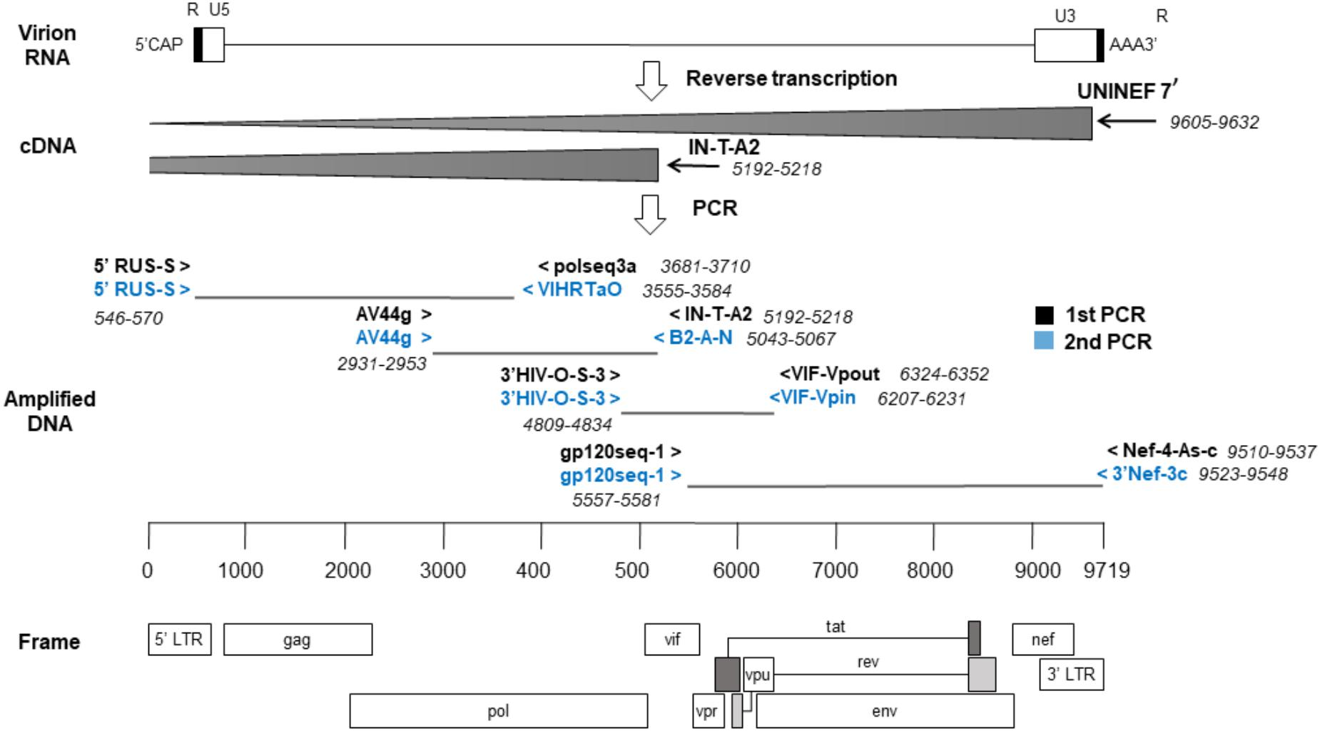 Frontiers | Characterization of New Recombinant Forms of HIV-1 From