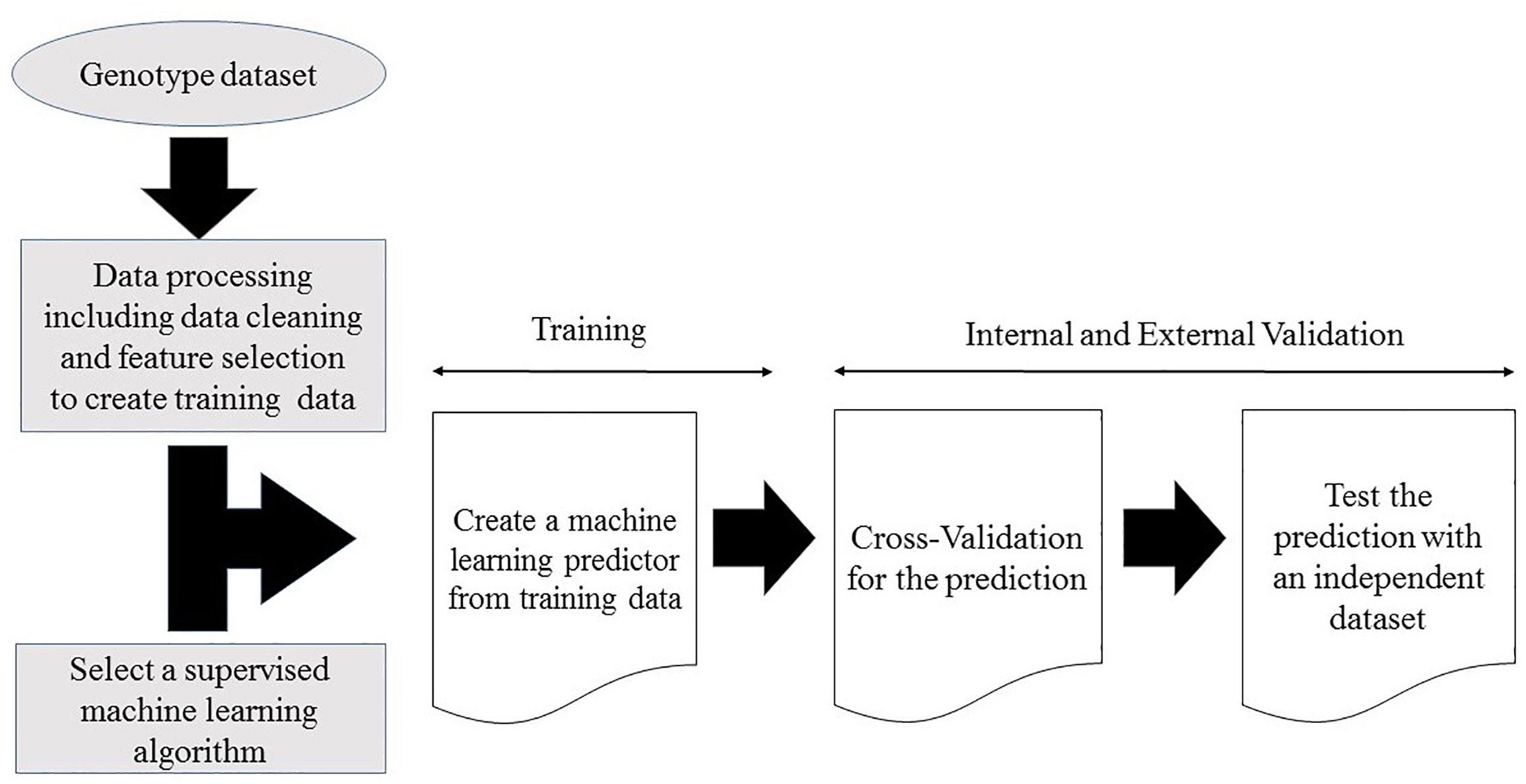 Frontiers | Machine Learning SNP Based Prediction for Precision