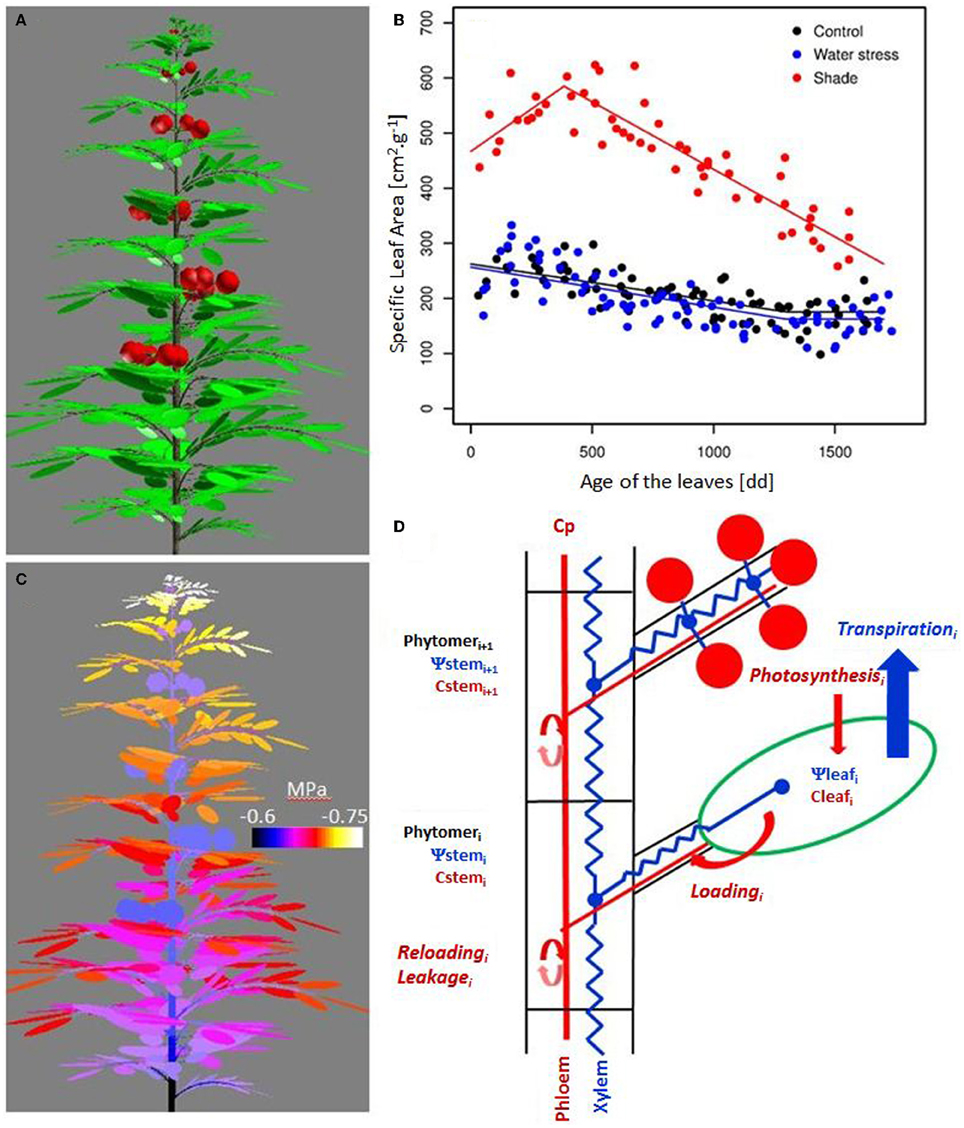 Frontiers in silico analysis of water and carbon relations under frontiersin pooptronica Choice Image