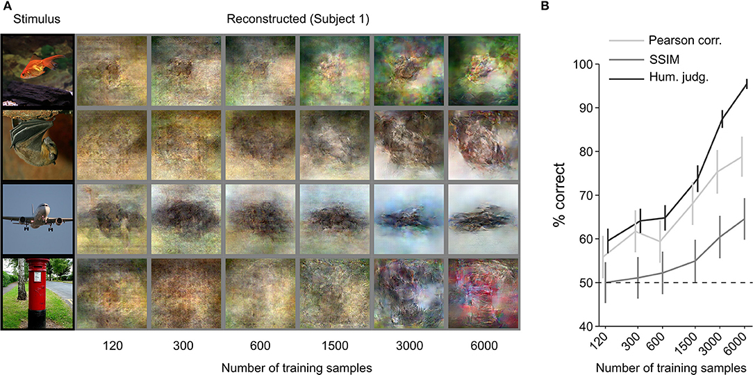 Frontiers | End-to-End Deep Image Reconstruction From Human