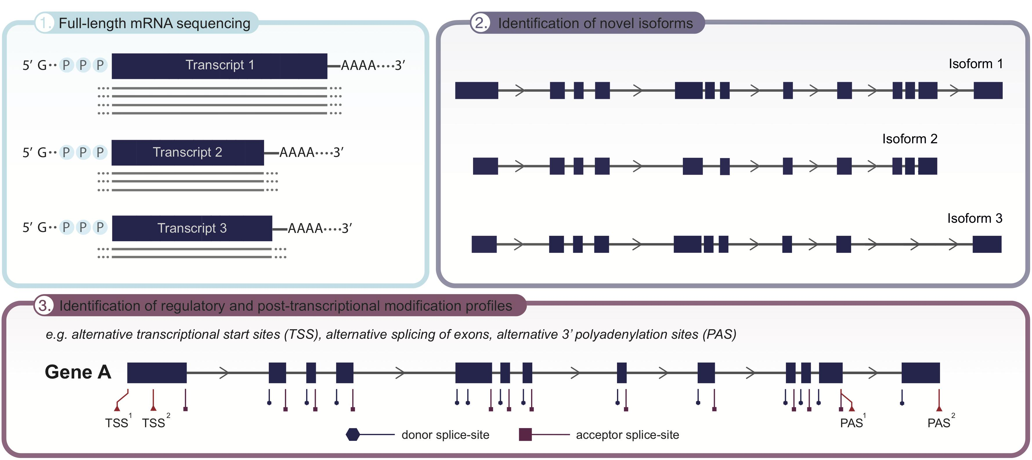 Frontiers   Long-Read Sequencing Emerging in Medical
