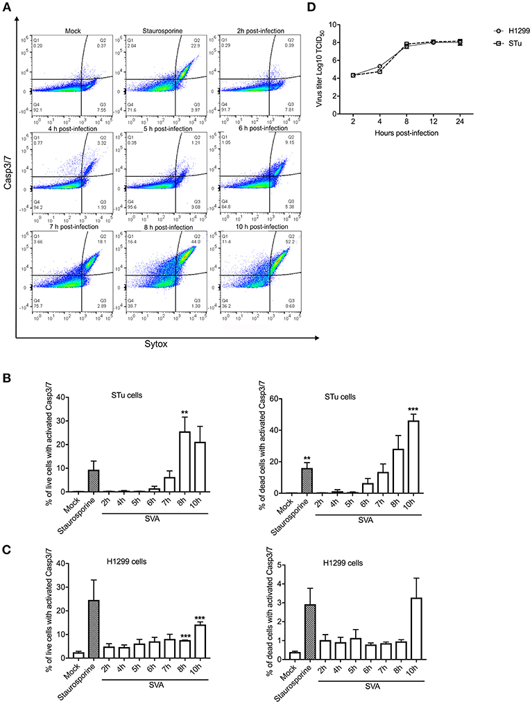 Frontiers | Senecavirus A 3C Protease Mediates Host Cell
