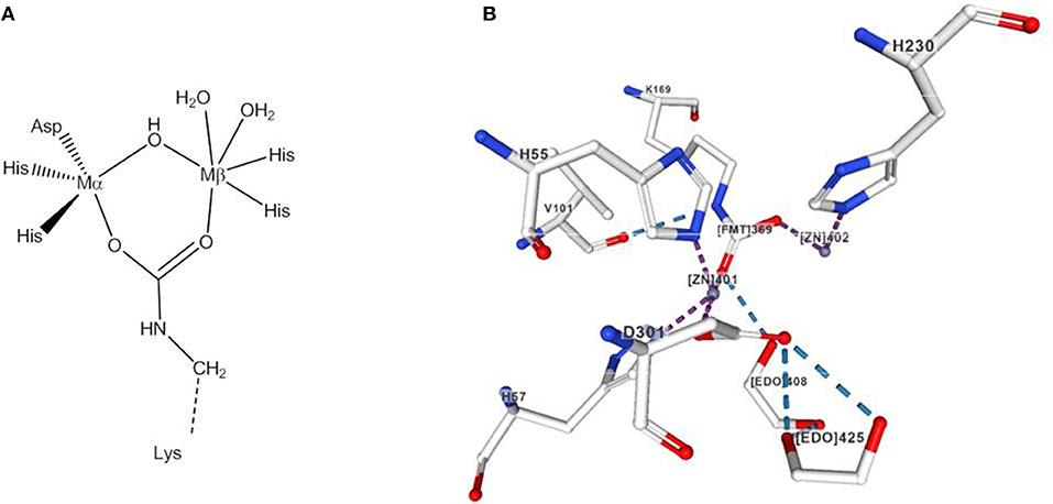 Frontiers | Mechanistic Studies of Homo- and Heterodinuclear
