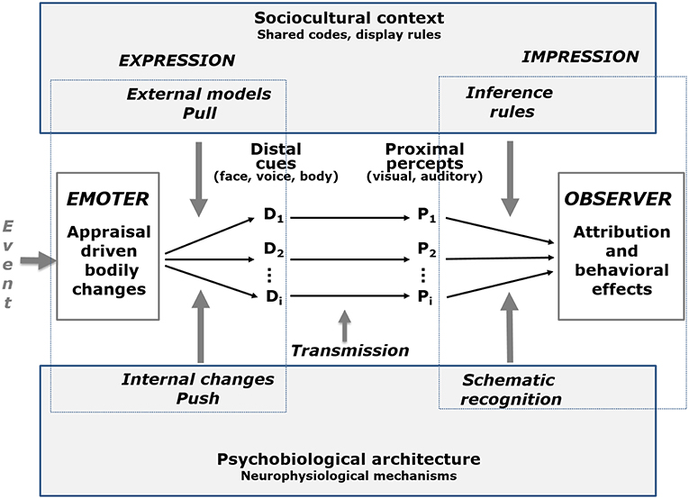 Frontiers | Dynamic Facial Expression of Emotion and