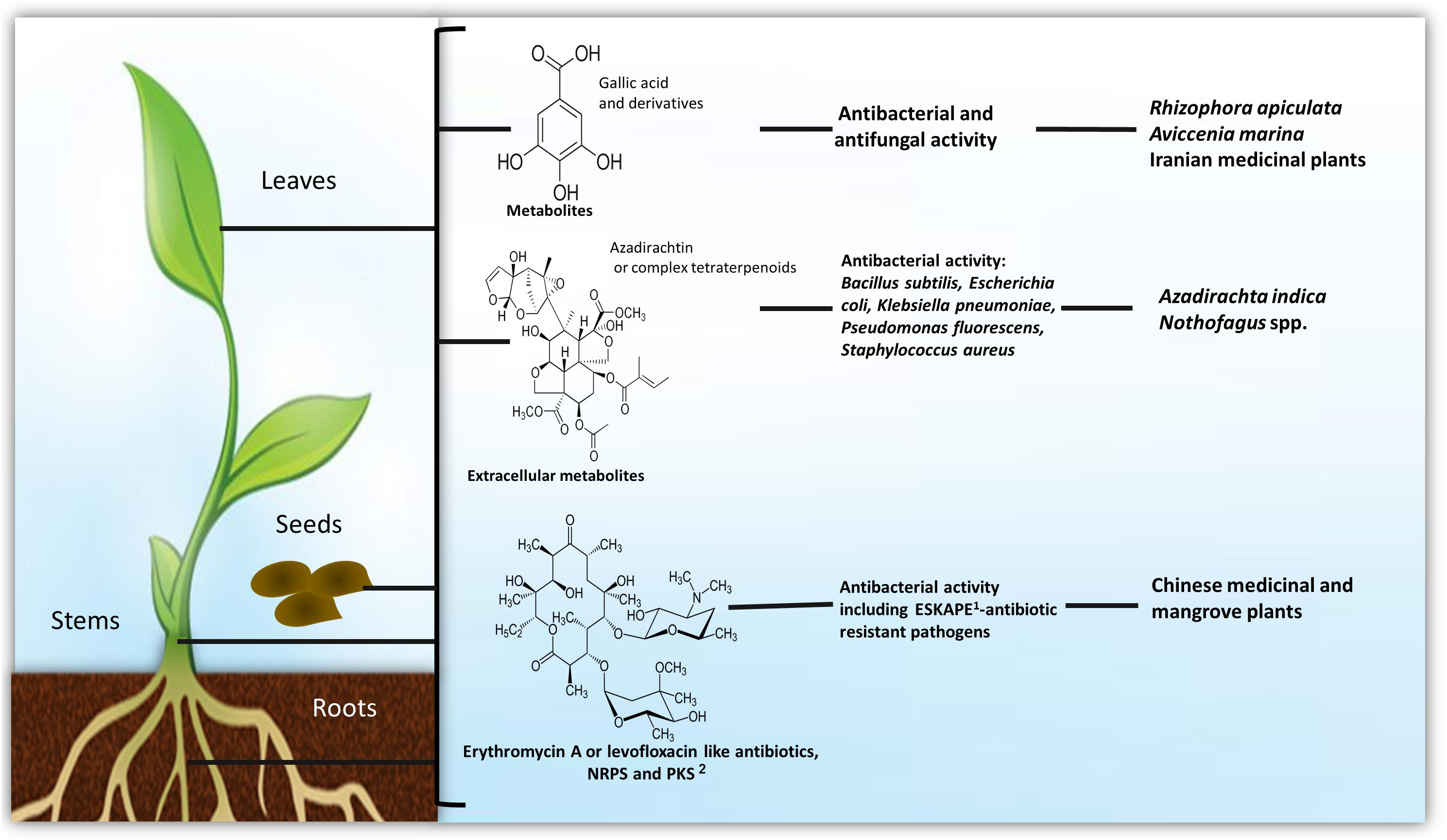 Frontiers | Bioactive Products From Plant-Endophytic Gram-Positive