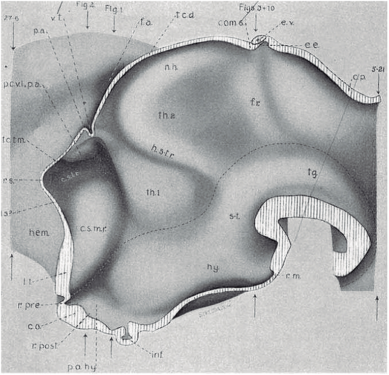 Frontiers | Survey of Midbrain, Diencephalon, and