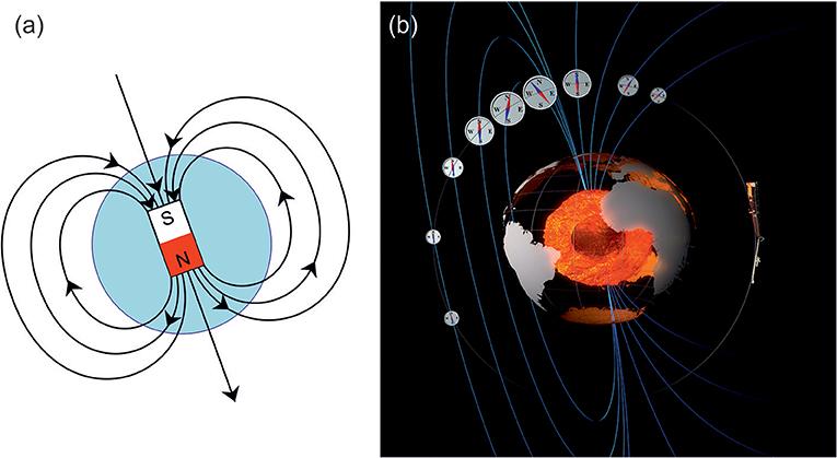 איור 1 - (a) המחשה של קווי השדה המגנטי מִבּר מגנטי פשוט, בדומה לשדה המגנטי של כדור הארץ.