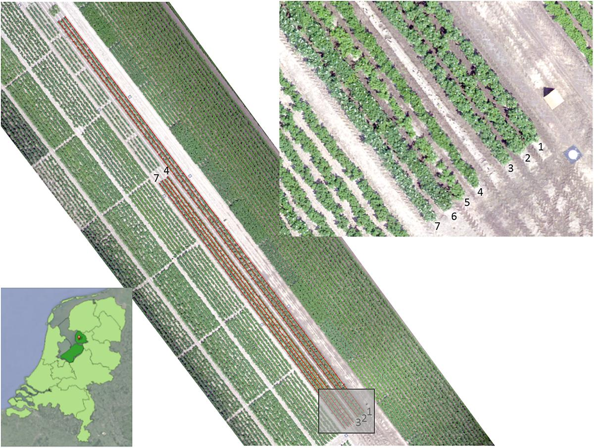 Frontiers | Potato Virus Y Detection in Seed Potatoes Using