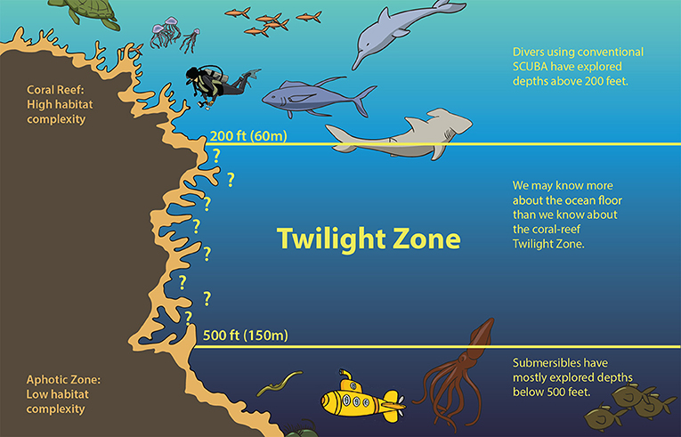 Figure 1 - The twilight zone is found between 60 and 150 meters (200 and 500 feet) deep, in between shallow coral reefs and the deep, completely dark, aphotic zone.