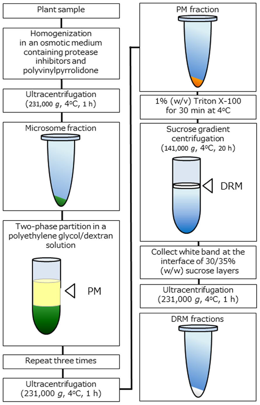 Frontiers | Detergent-resistant plasma membrane proteome to