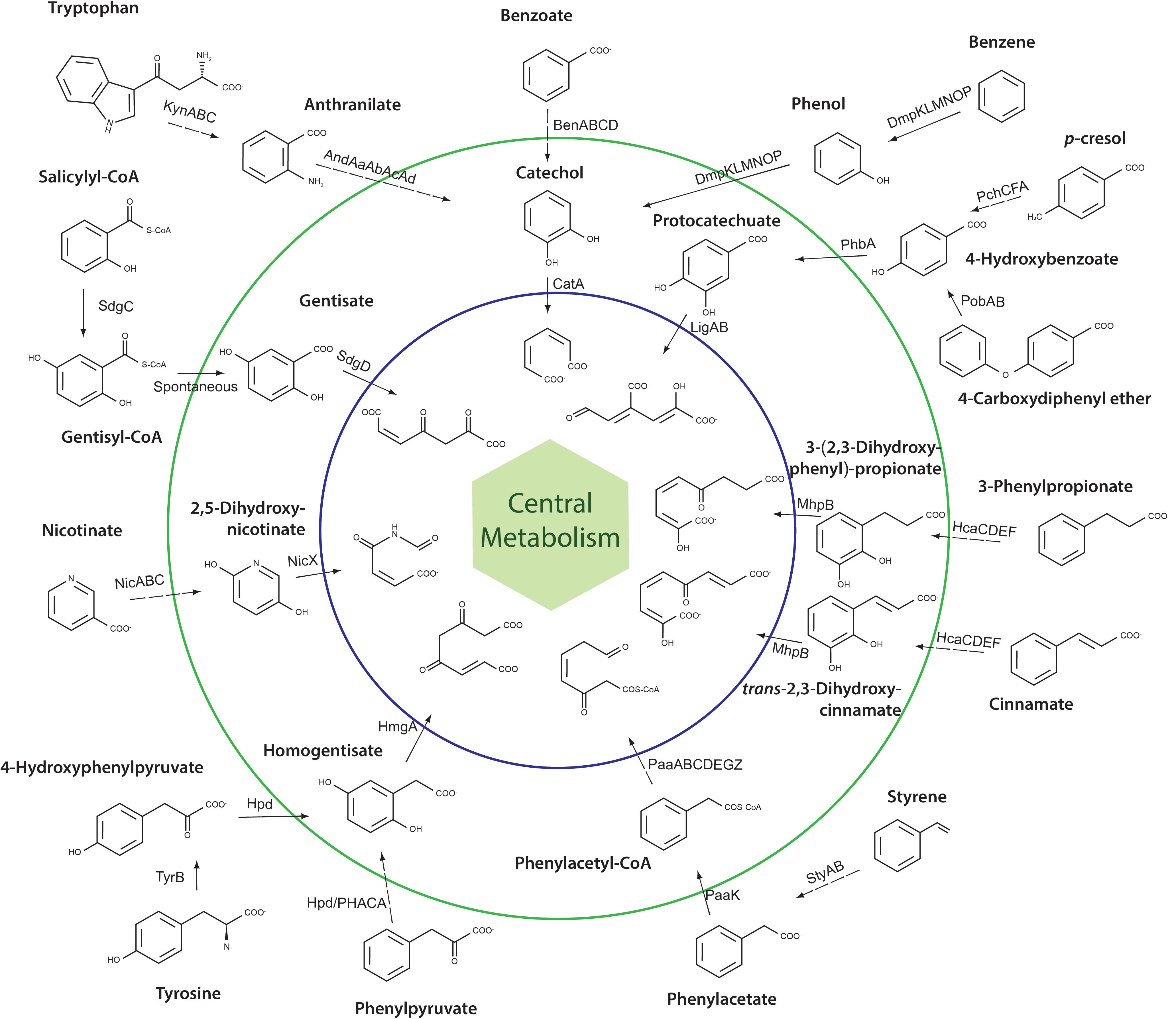 Frontiers | Genomic and Physiological Traits of the Marine