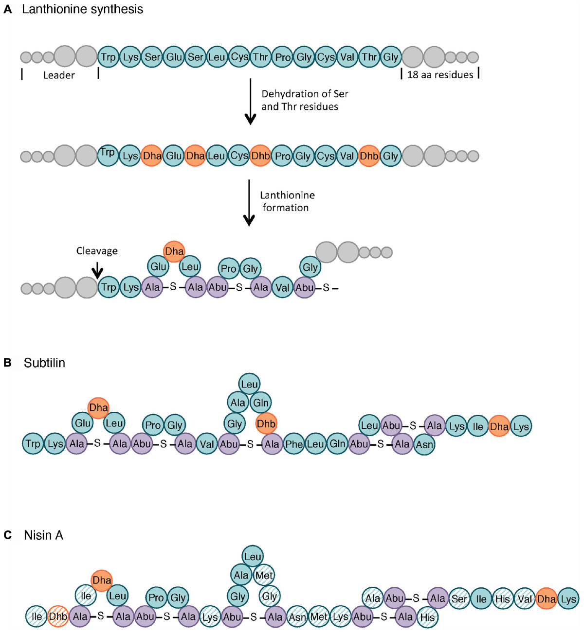 Frontiers | Overview of the Antimicrobial Compounds Produced by