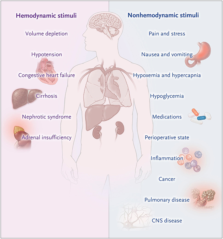 Frontiers Misconceptions And Barriers To The Use Of Hypertonic Saline To Treat Hyponatremic Encephalopathy Medicine