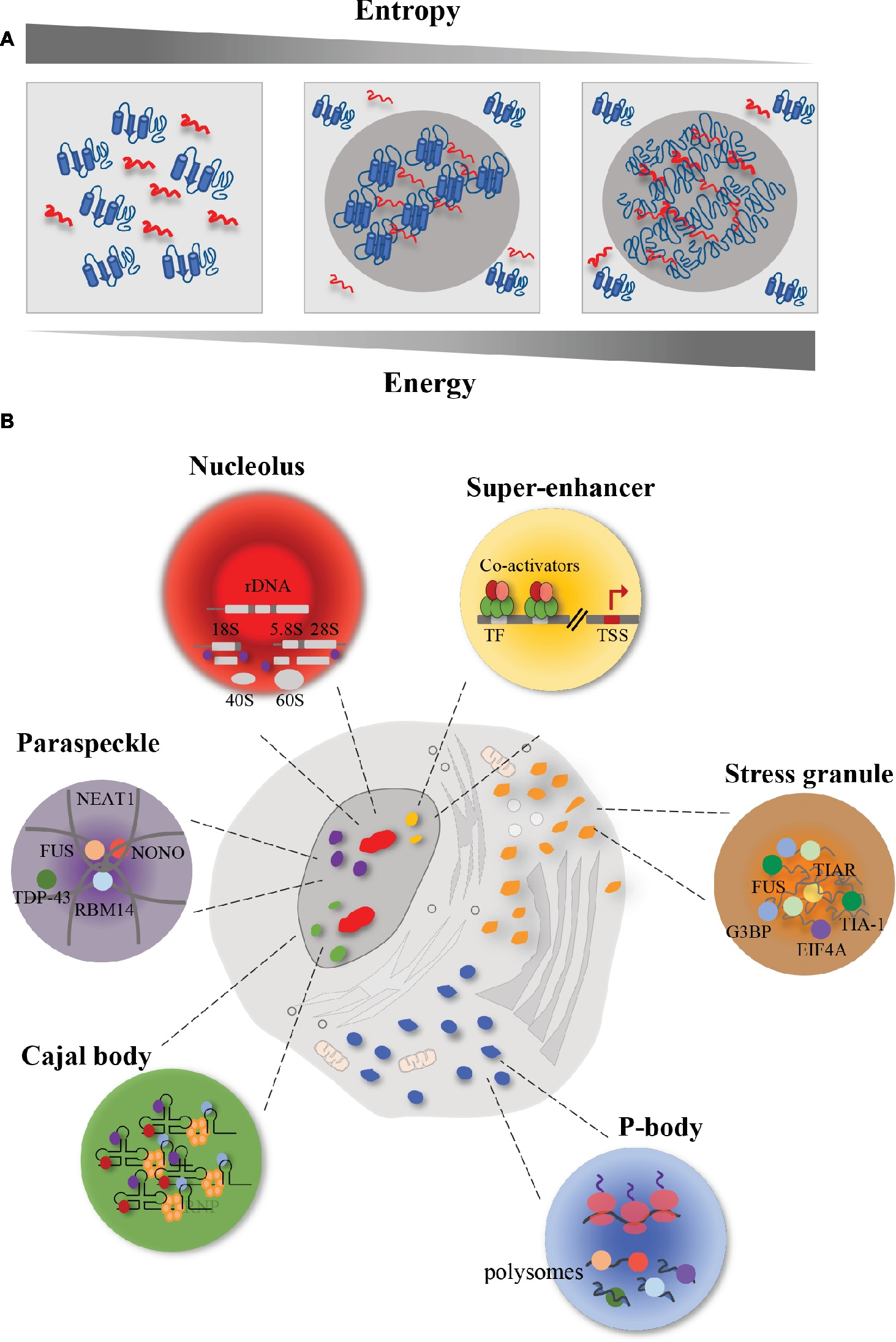 Frontiers | Aberrant Phase Transitions: Side Effects and Novel