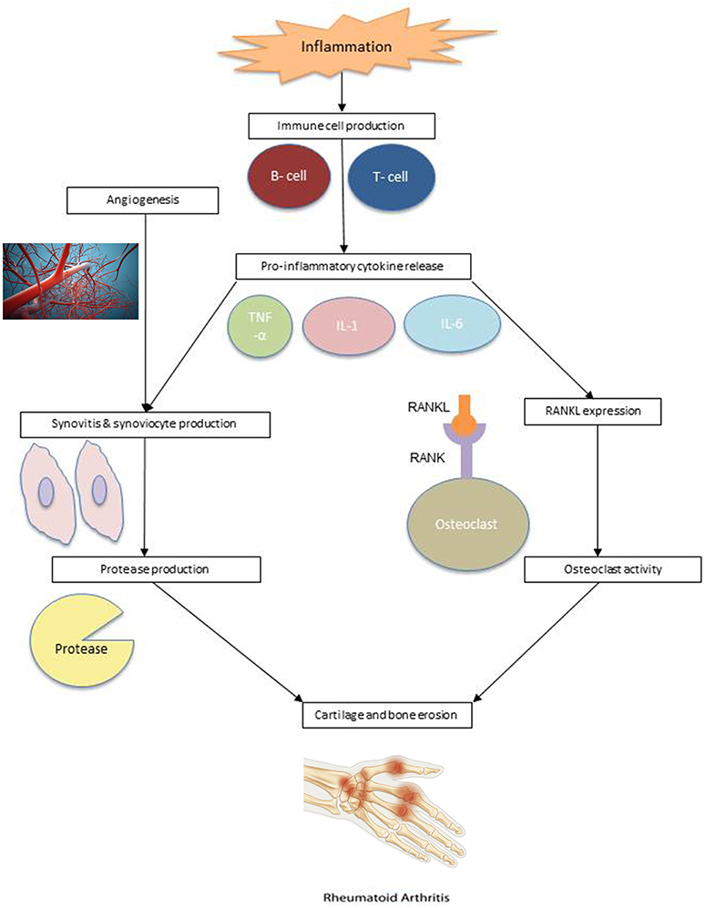 Frontiers Nutrition Interventions In Rheumatoid Arthritis The Potential Use Of Plant Based Diets A Review Nutrition