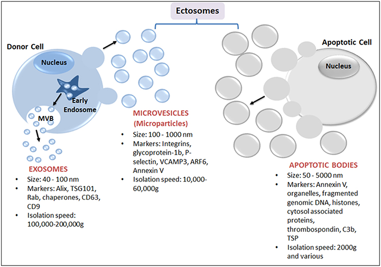 Frontiers | Intercellular Vesicular Transfer by Exosomes