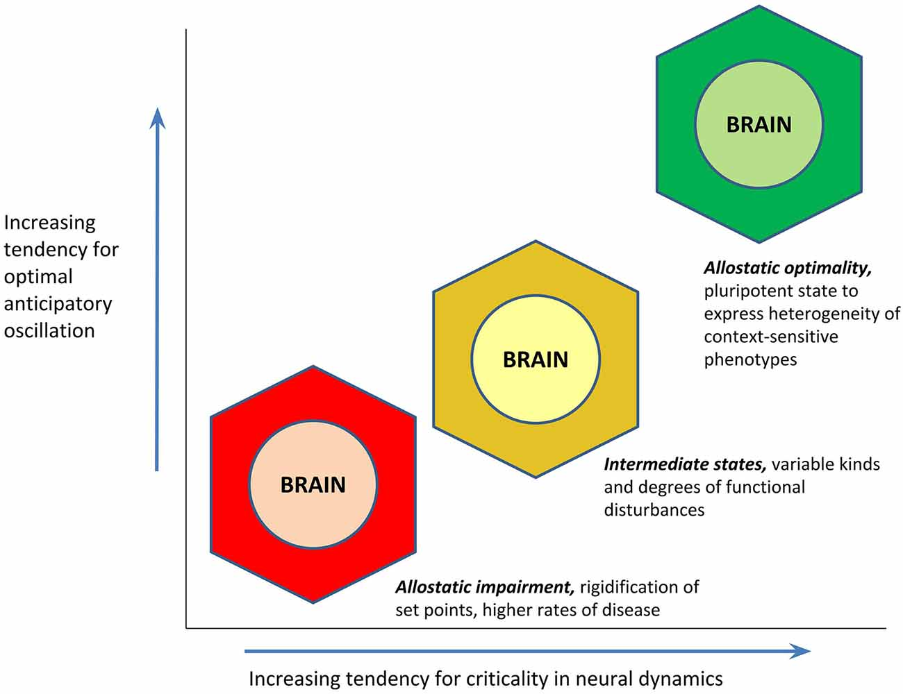 Frontiers | A Copernican Approach to Brain Advancement: The
