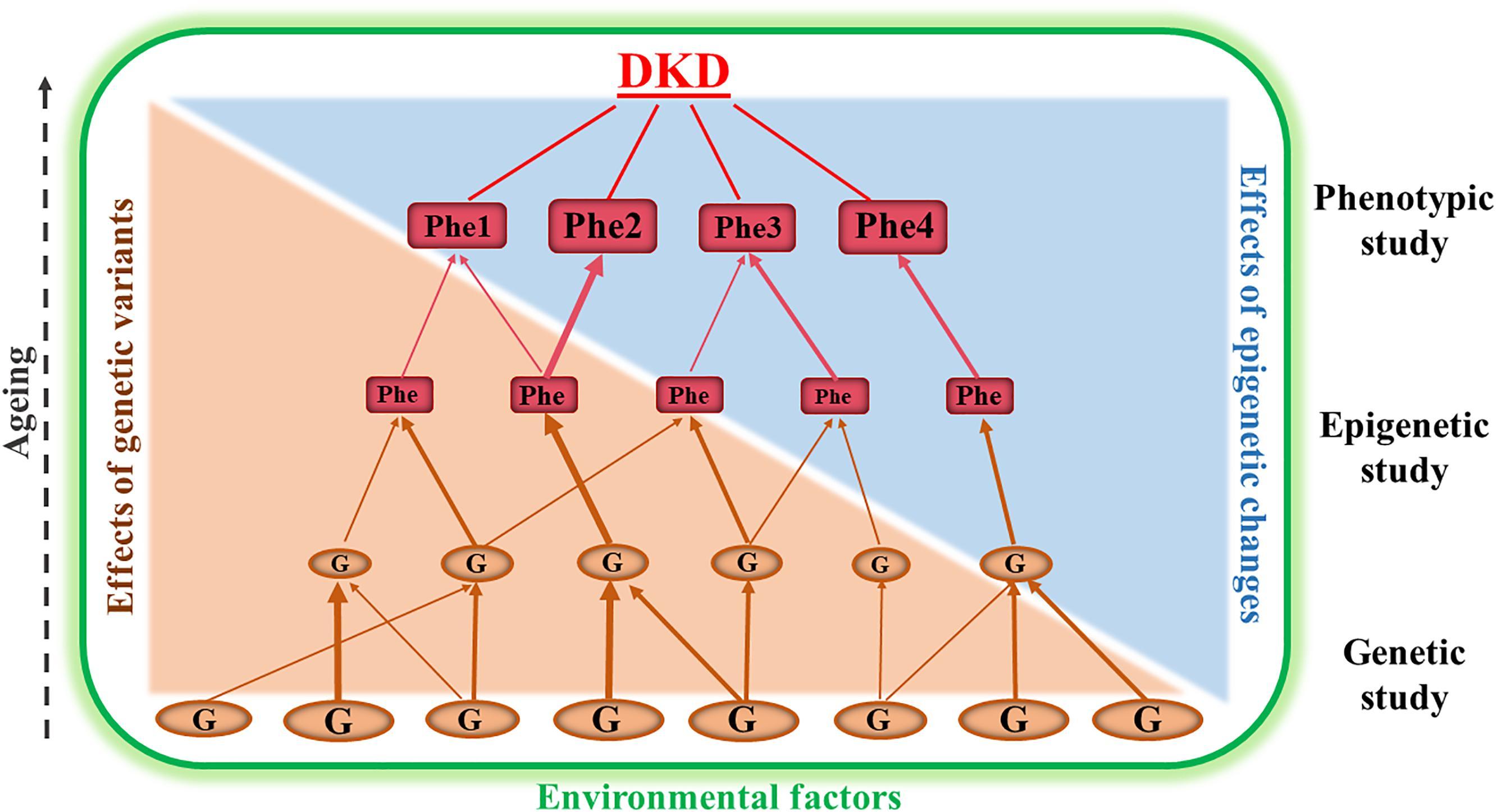Frontiers   Genetic and Epigenetic Studies in Diabetic